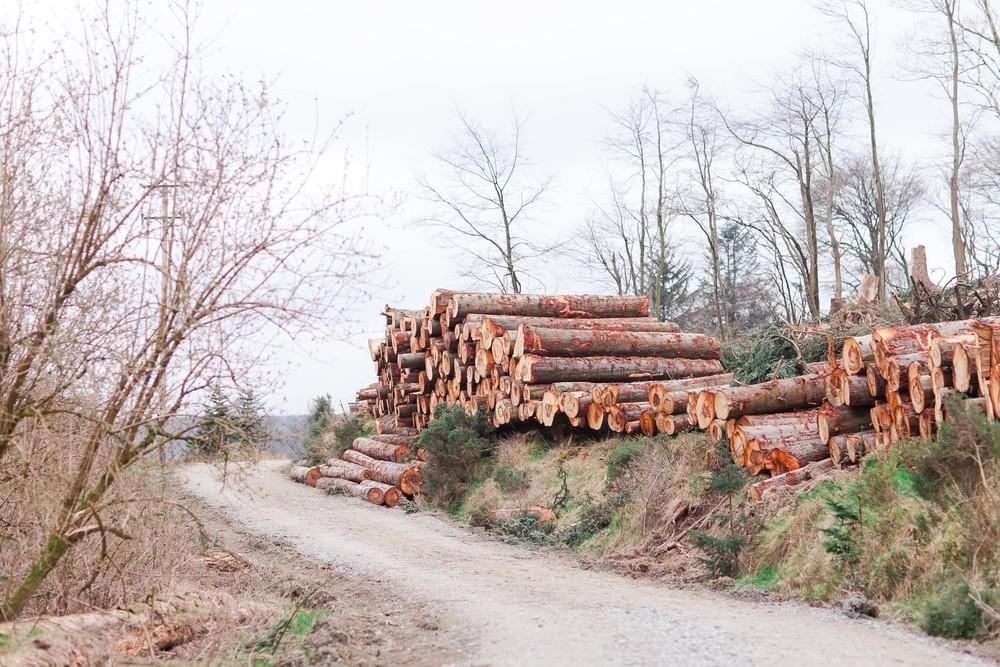 Cruagh Nature Walk-0005.jpg