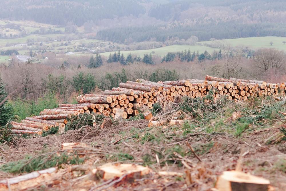 Cruagh Nature Walk-0008.jpg