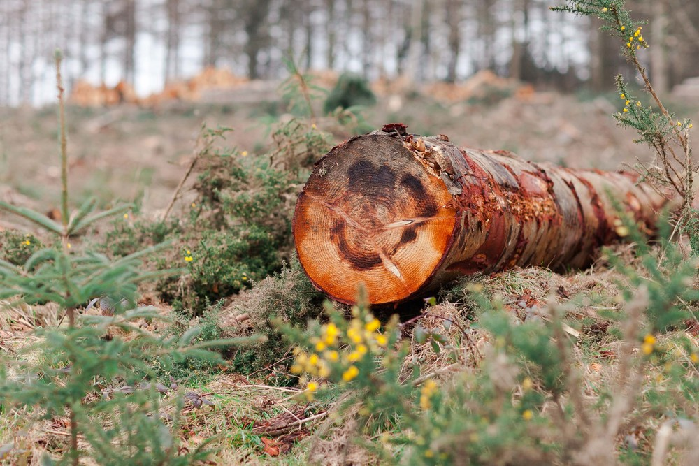 Cruagh Nature Walk-0010.jpg