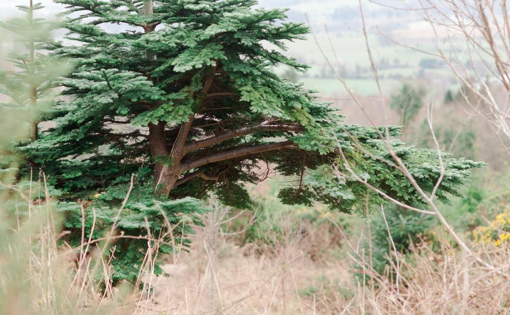 Cruagh Nature Walk-0017.jpg