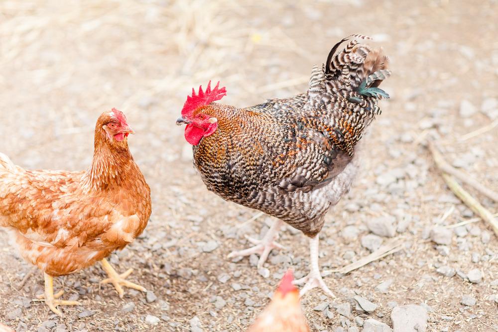 Animal Farm-0008.jpg