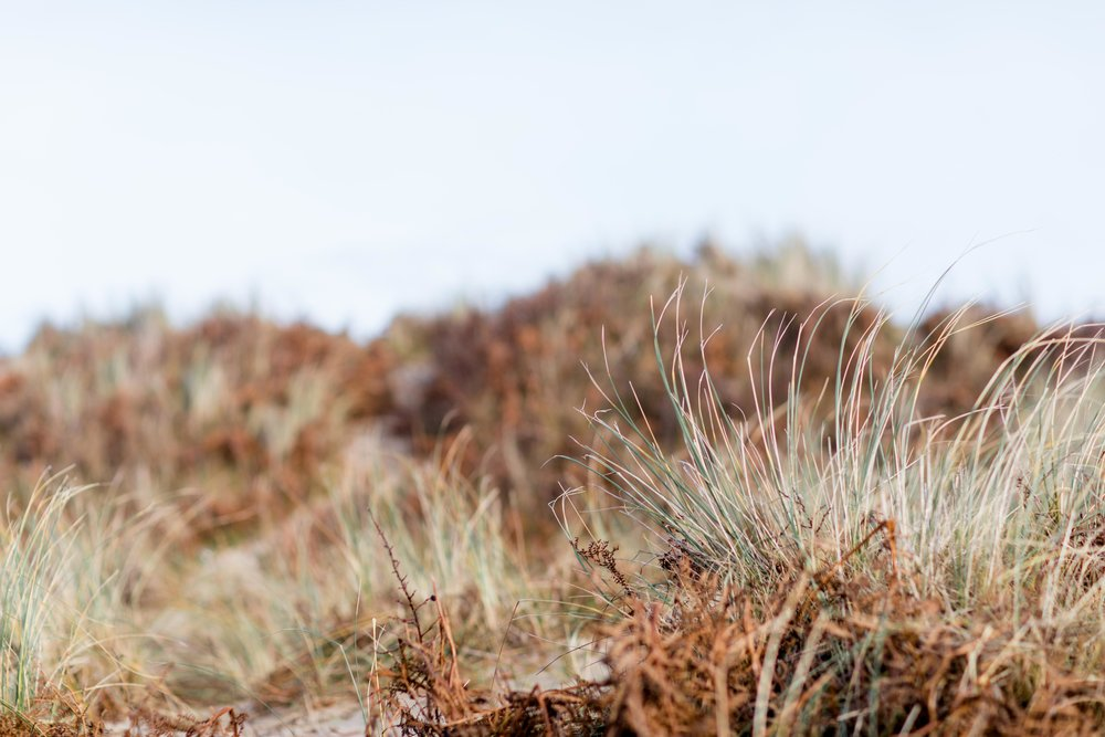 dry grass on the side of the beach at brittas bay in ireland