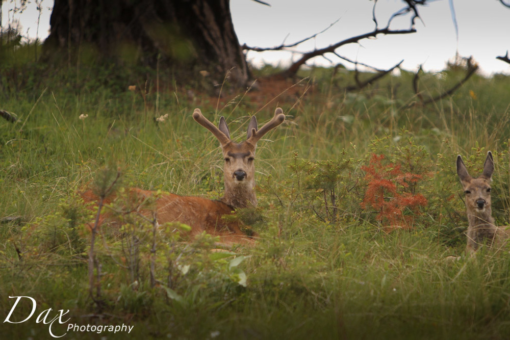 wpid-Montana-Bison-Range-Wildlife-1051.jpg