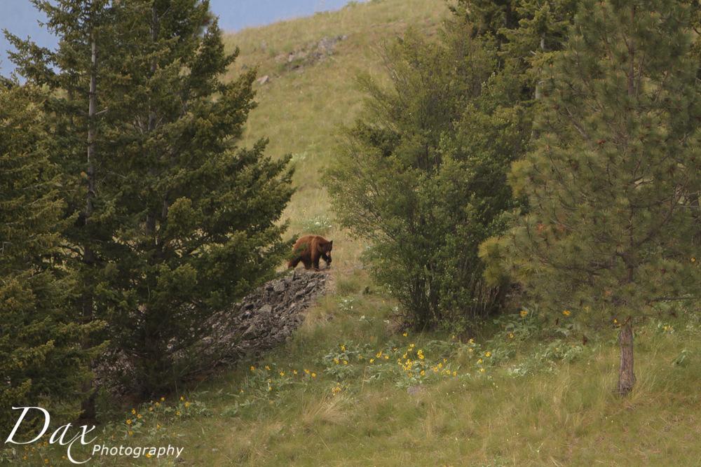 wpid-Montana-Bison-Range-Wildlife-1061.jpg