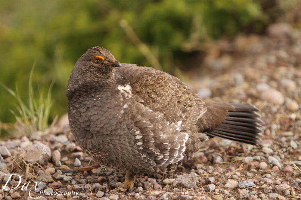 wpid-Montana-Bison-Range-Wildlife-1128.jpg