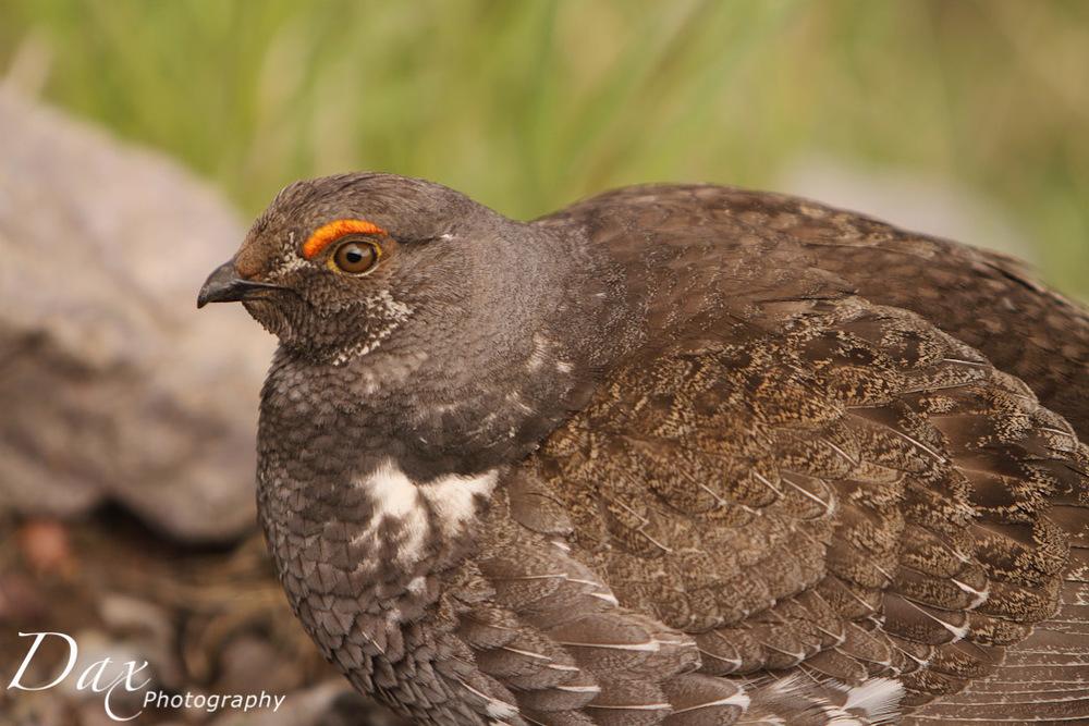 wpid-Montana-Bison-Range-Wildlife-1153.jpg