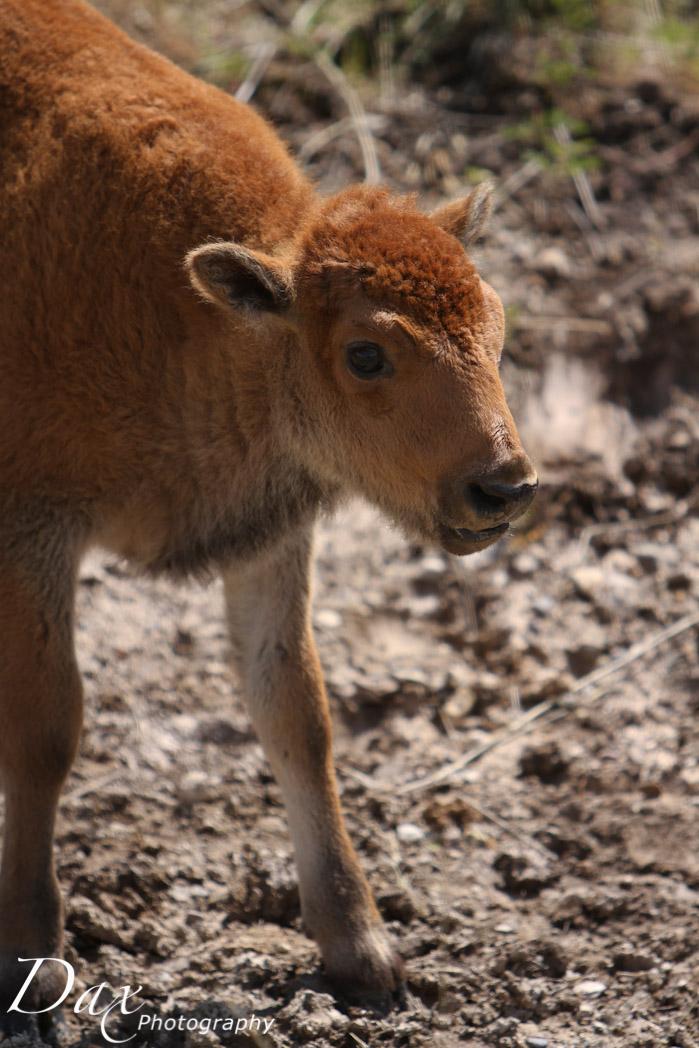 wpid-Montana-Bison-Range-Wildlife-1336.jpg