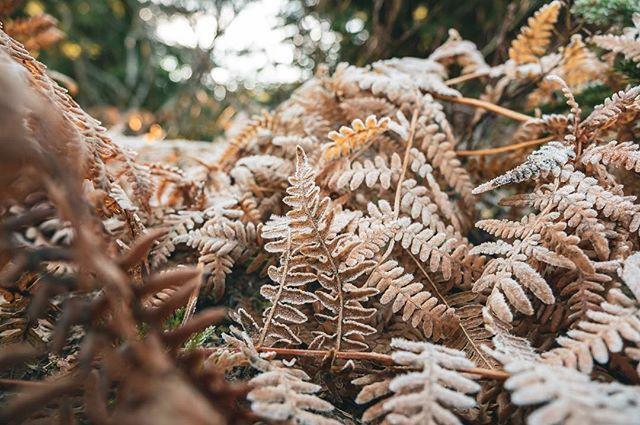 A frosty fernny