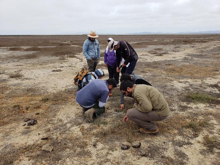 aprendiendo sobre la flora de las charcas vernales