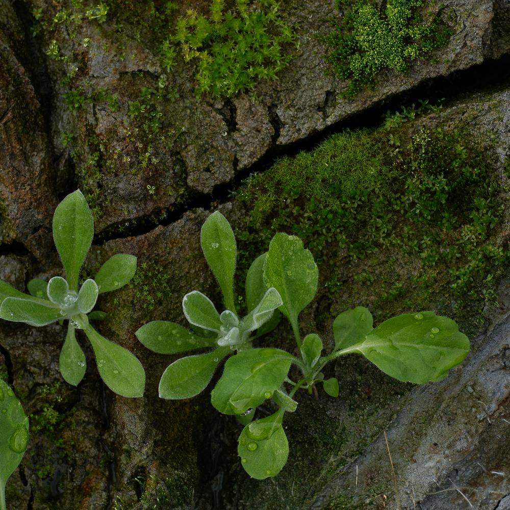 moss_square.jpg