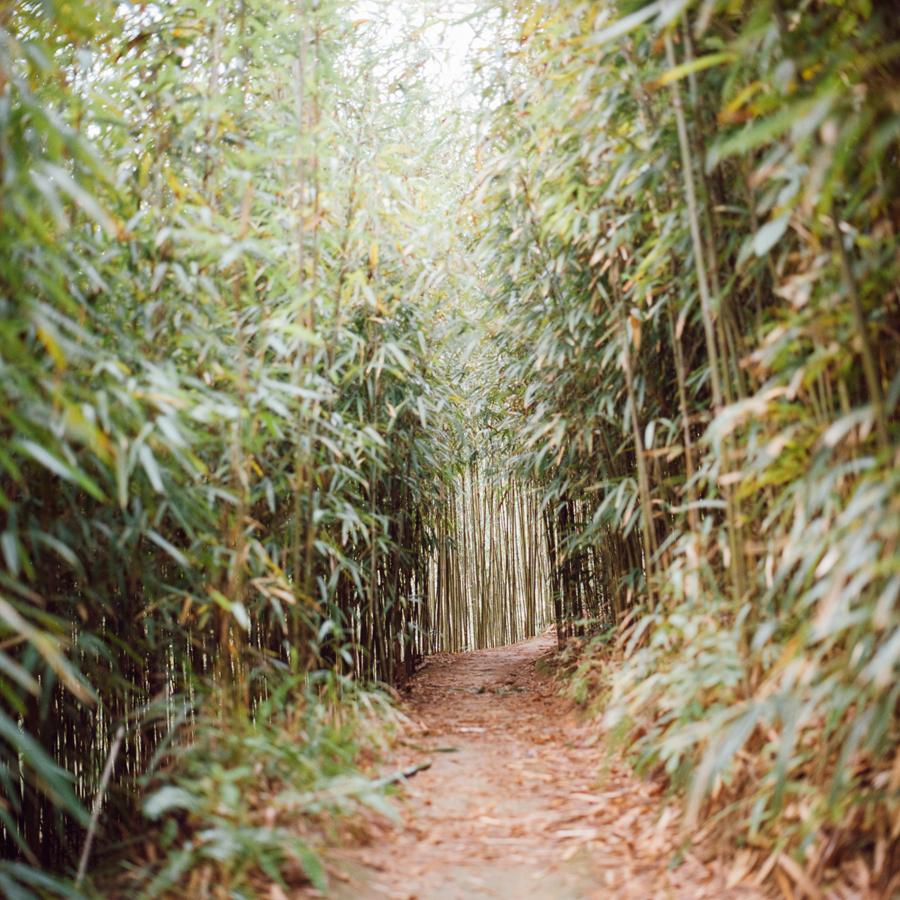 jungblut_bamboo_06.jpg