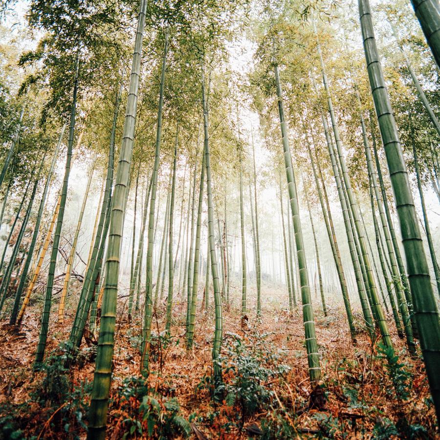 jungblut_bamboo_10.jpg