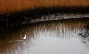 Spill Threatens Wetland