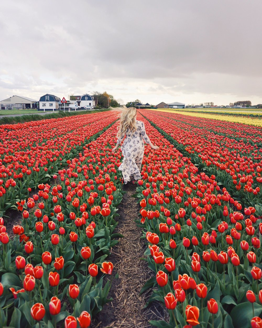 Tulips in Holland 1.jpg