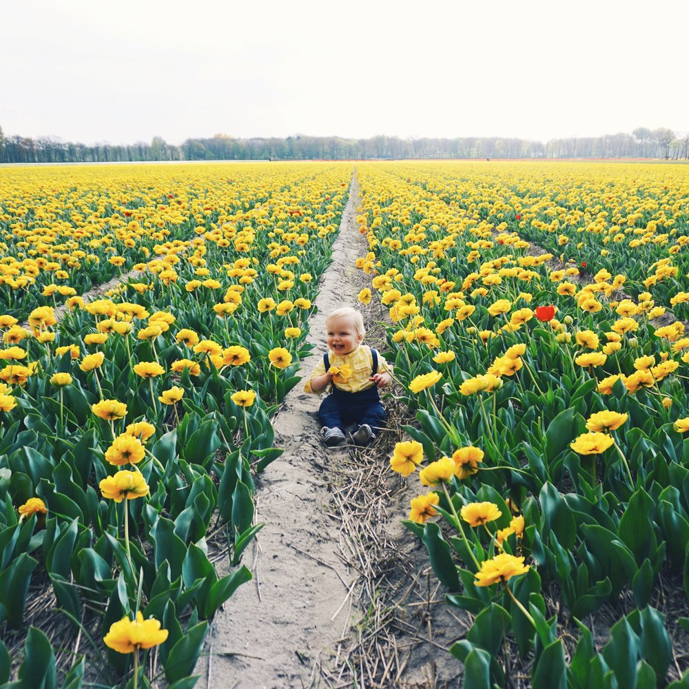 Tulips in Holland 4.jpg