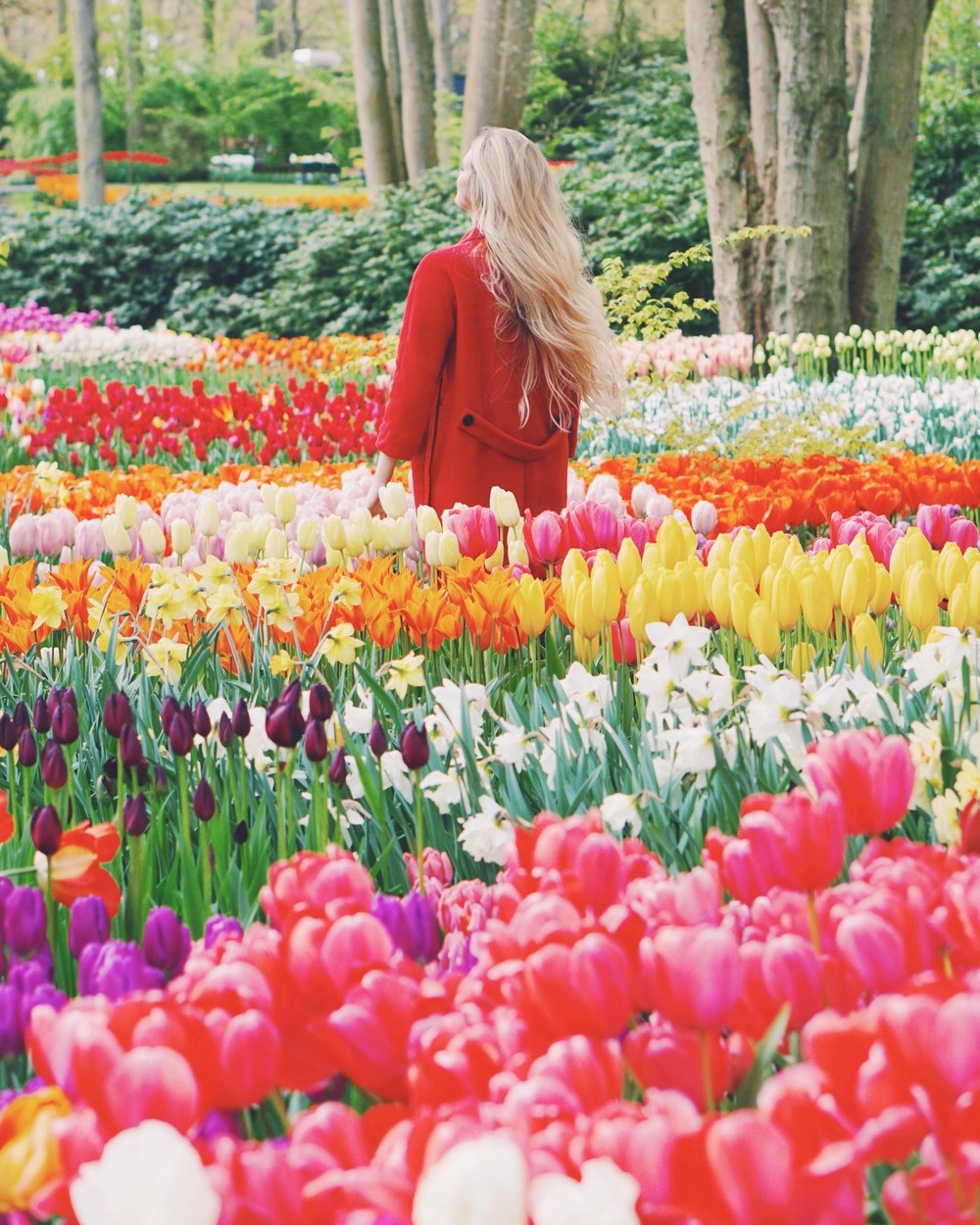 Tulips in Holland 8.jpg