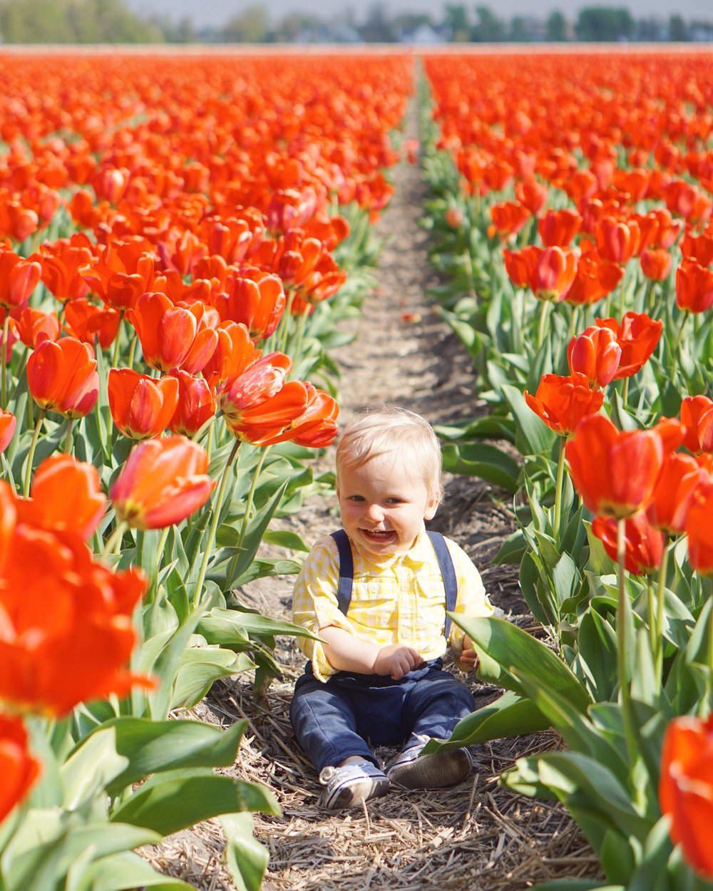 Tulips in Holland 16.jpg