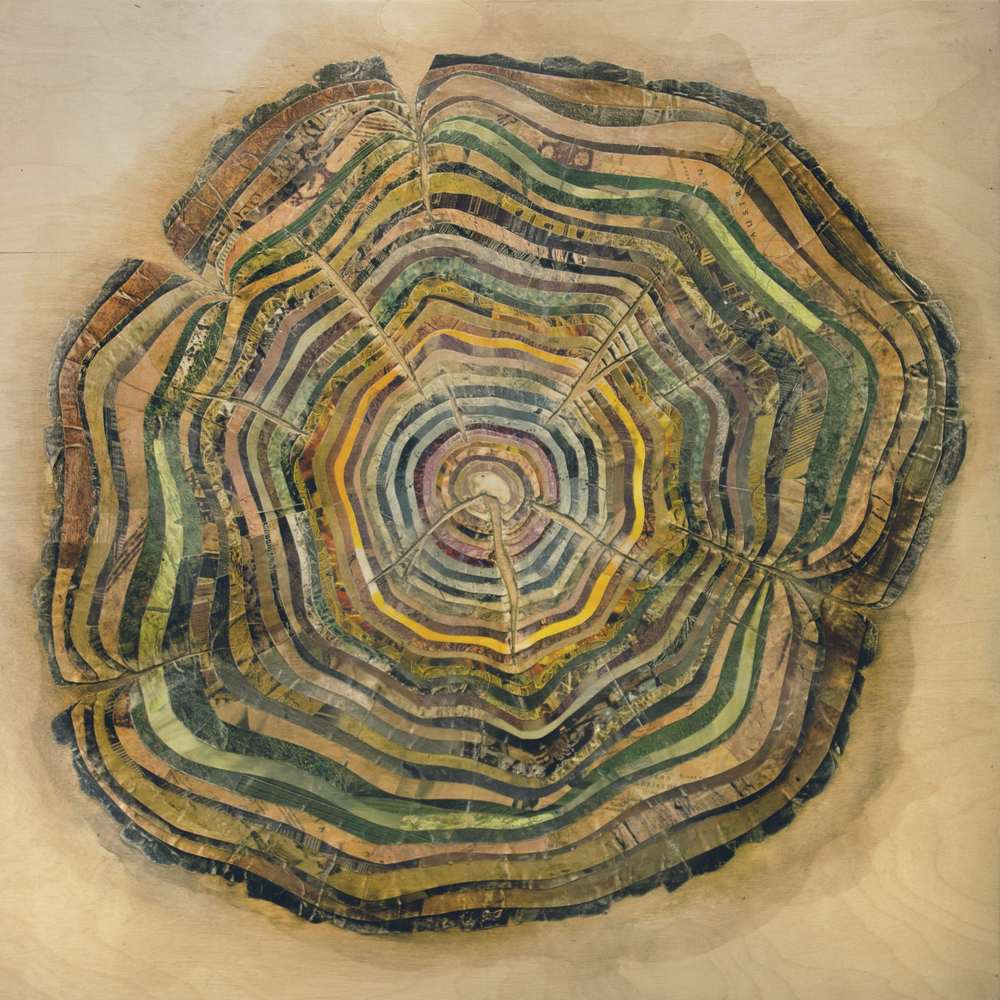Oak Bisection, 2015, mixed media on wood panel, 24 x 24 inches