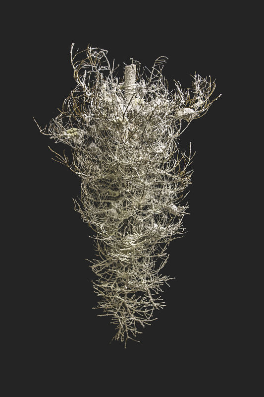 Tree, 2013, dead Christmas tree and plaster