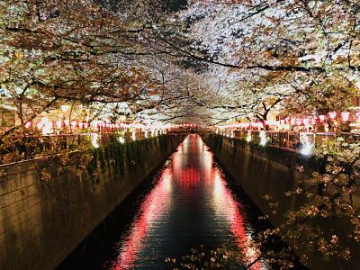 Night version of cherry blossom at the heart of Naka Meguro, Tokyo Japan
