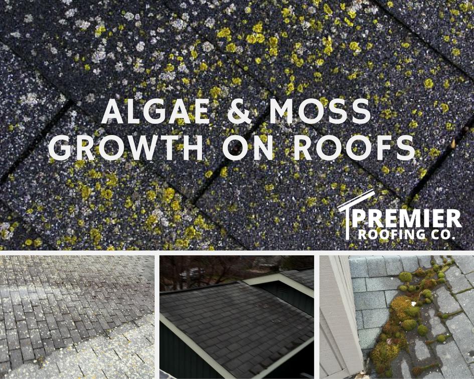 Algae U0026 Moss Growth On Roofs In Anchorage