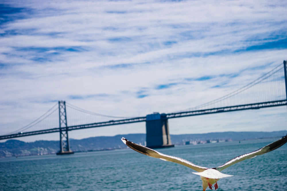 Seagull flying toward the Bay Bridge
