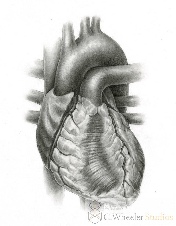 Heart, 2014