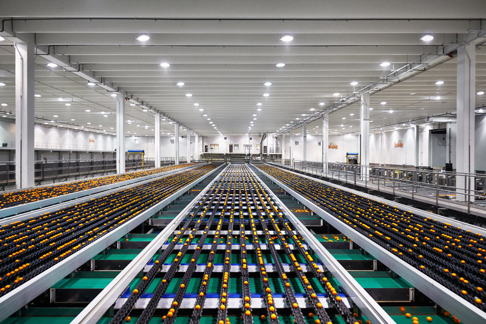 Inside the Paramount Citrus Halos Plant in Delano, CA