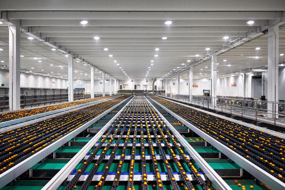 Paramount Citrus Mandarin Plant, Delano, California, 2014