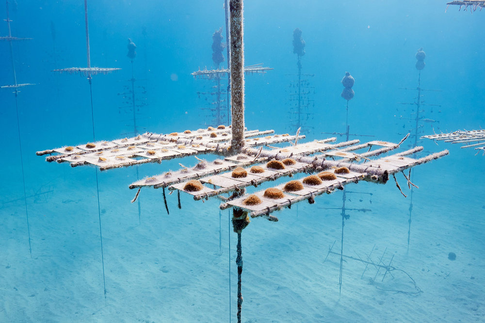 Coral Nursery, Florida Keys, 2017