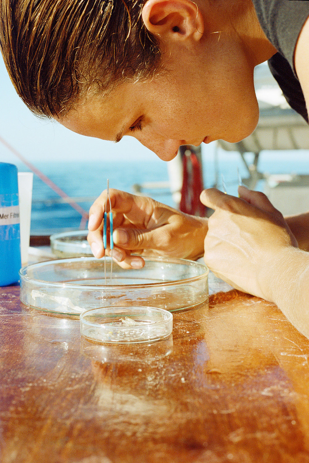 Plastic Pollution Sample Onboard Tara, Scientific Research Vessel, Mediterranean Sea, 2014