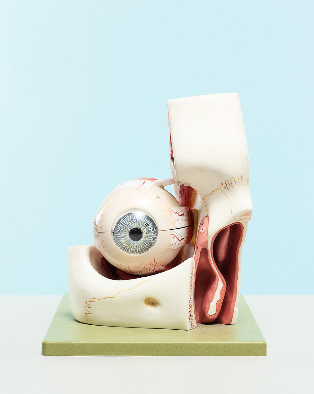 Human Eye Anatomical Model, 2010
