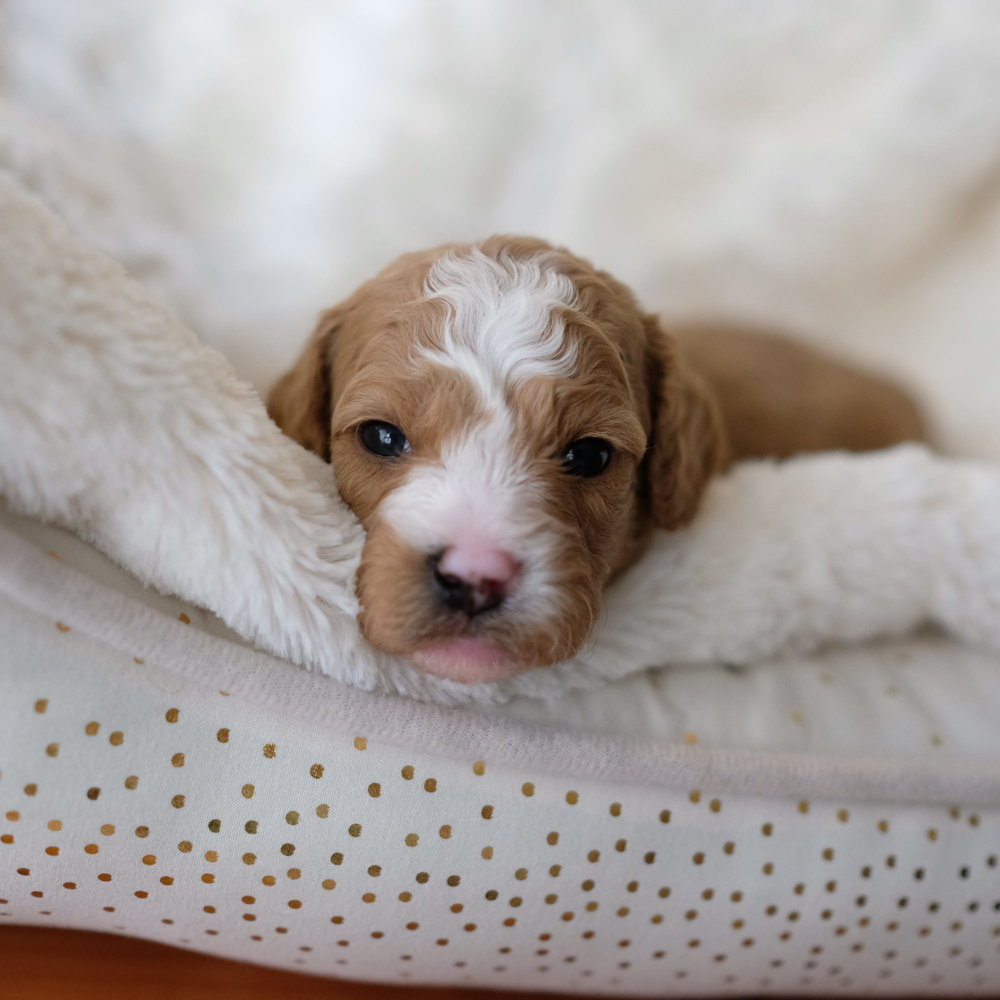 3 weeks old Charlie