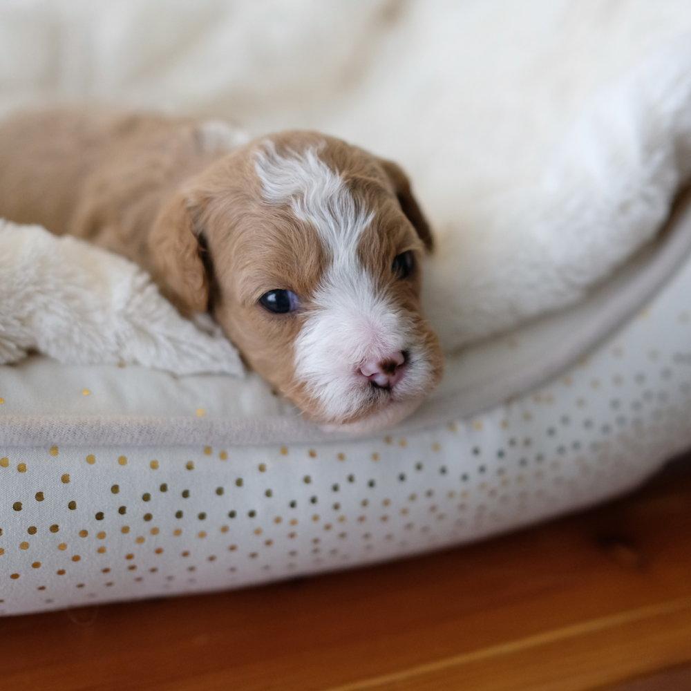 3 week old Linus
