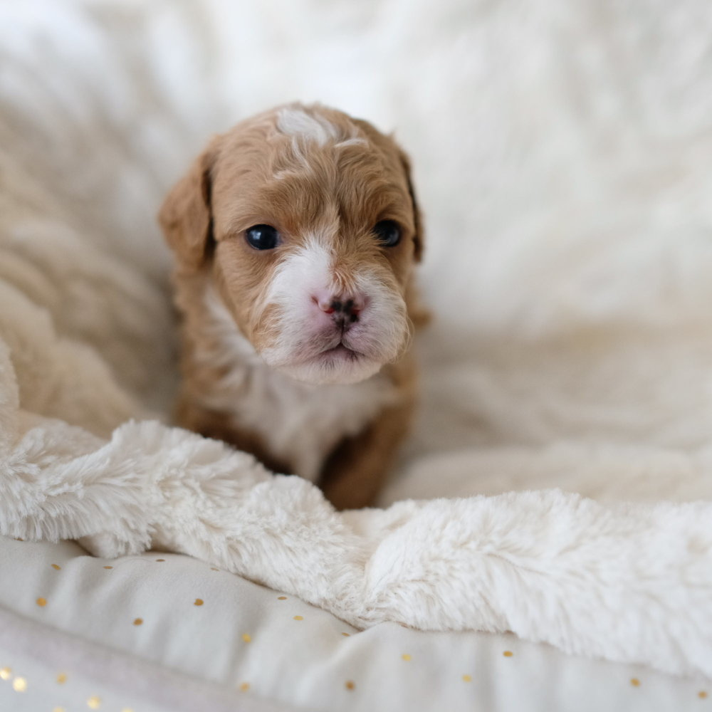 3 week old Shermy