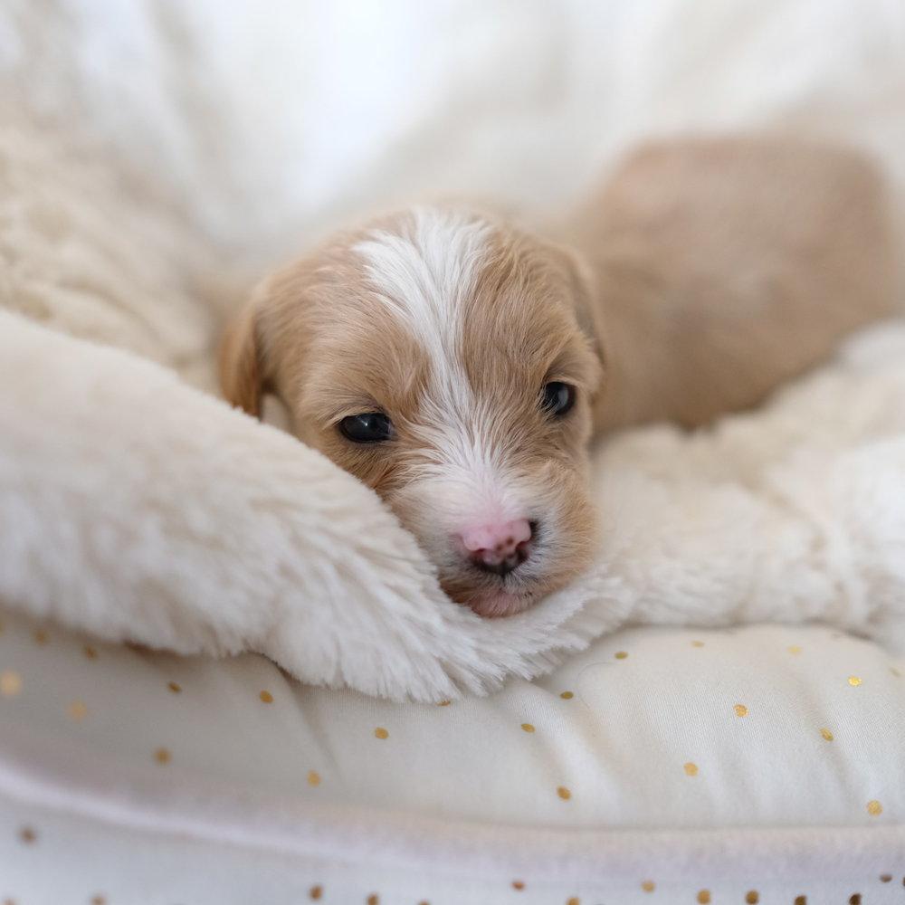 3 week old Violet!