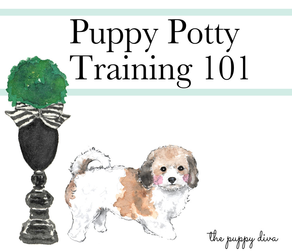 puppypottytraining101square.jpg