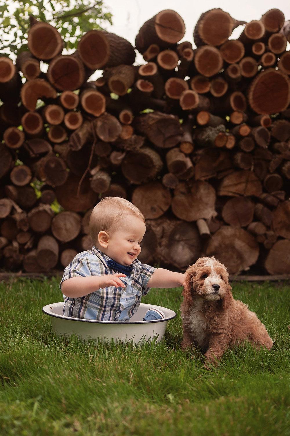 bluebell puppy cavapoochon