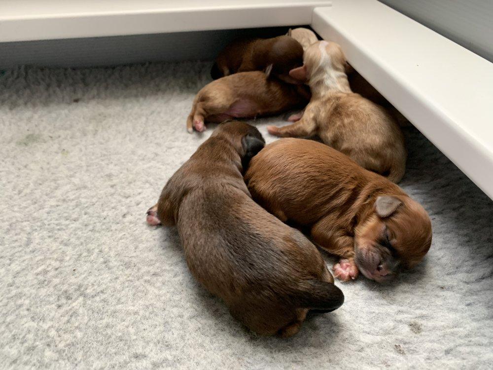 Sweet newborns! A few hours old…