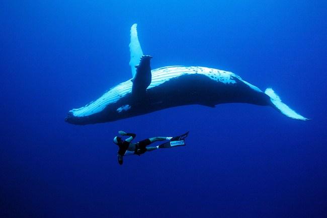 35_paraisos_submarinos_donde_ser_feliz_bajo_el_mar_248379773_650x.jpg