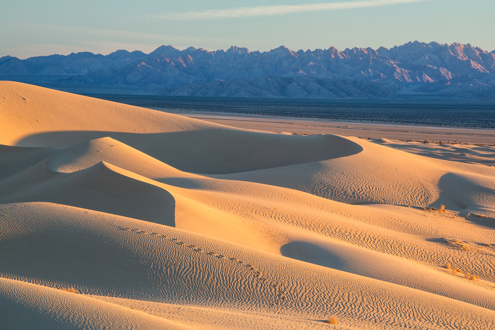 Mojave_Trails_National_Monument_dunes.jpg