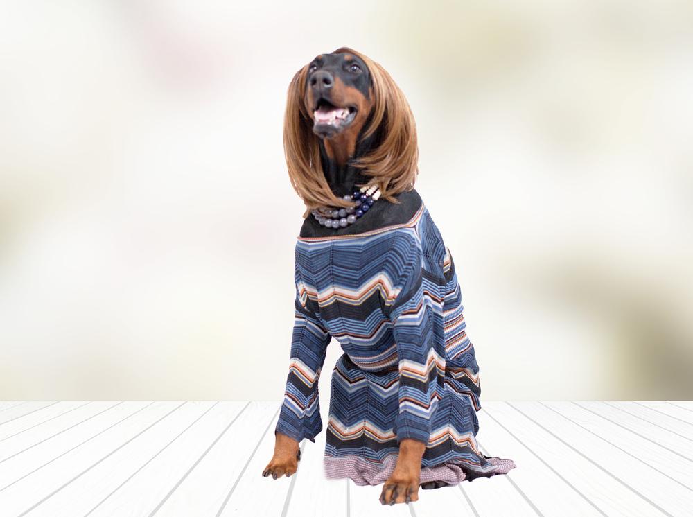 Tea_Stevies dog.jpg