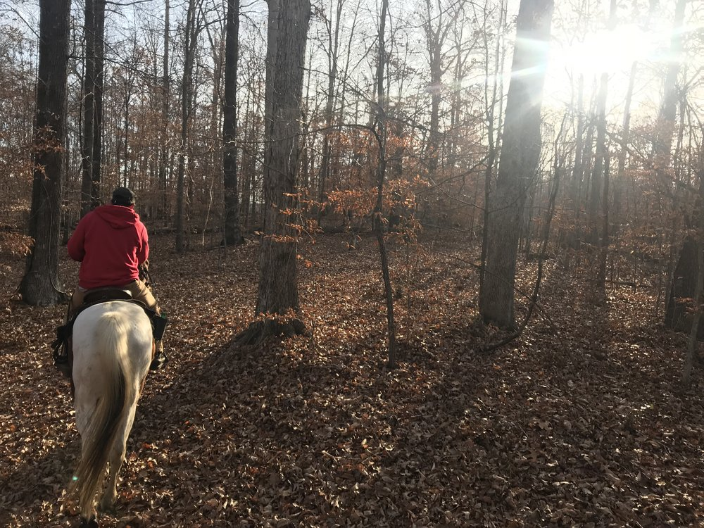 Horse Early Morning Ride.jpg