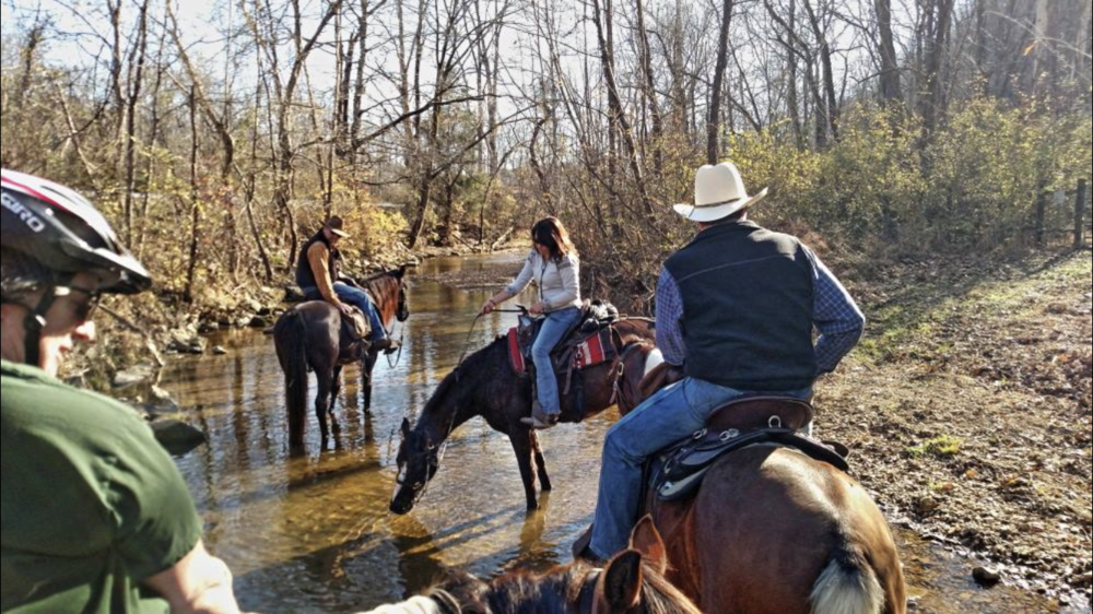 Horses drink from BEF creek.PNG