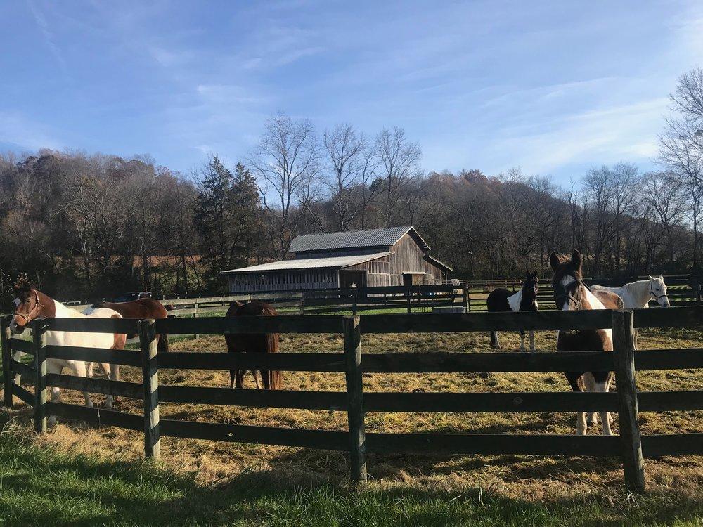 McP horses.jpg