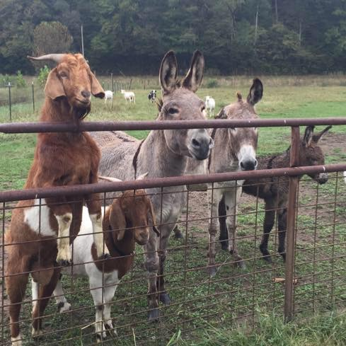 Meet the animals of Big East Fork Farms