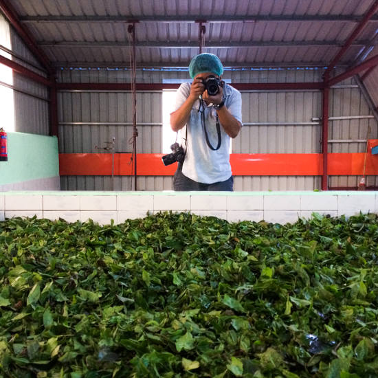 photographer John Lee in a Namhsan laphet processing facility right before the tea leaves are steamed