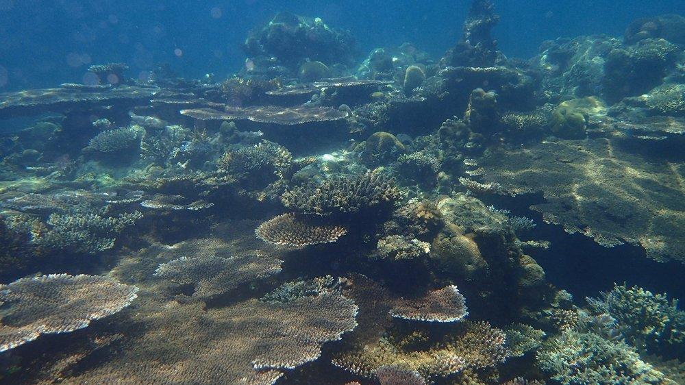 Coral Surveys in Tun Mustapha Park - Borneo, Malaysia