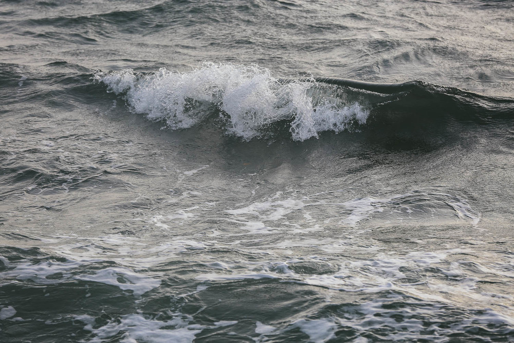 Orcas-2863.jpg