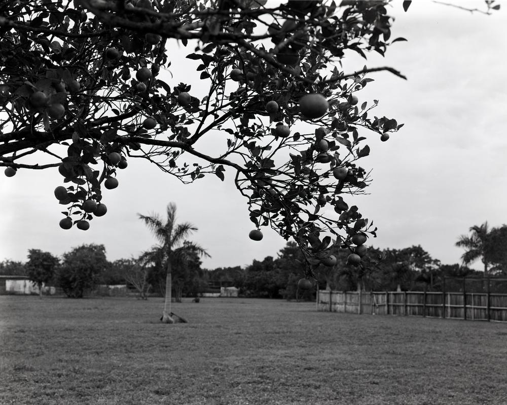 Citrus Grove, 2015
